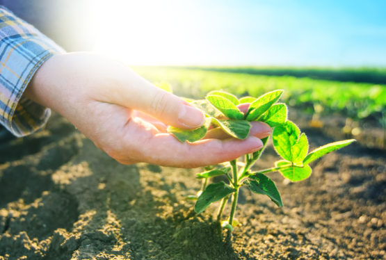 By Brigit Atkin Have you ever planted a garden? If so, you know how much time, effort, patience, and consistency it requires. Can you imagine working that hard only to let your product rot? It would be silly to let the fruits of your labor go to such waste. Yet that's what some of us […]