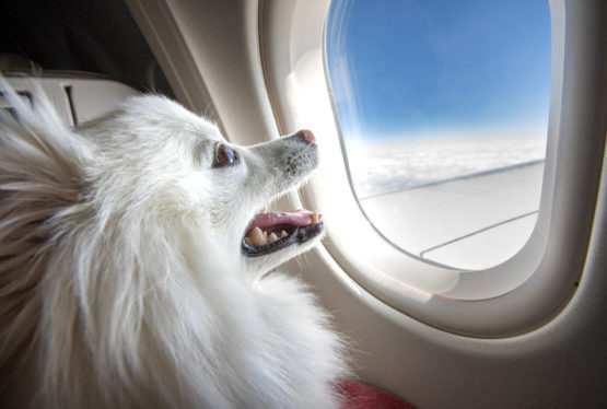 By Dr. Clayton Barton Summer is the season for vacations. Most likely, you have made travel plans. The question is, will your pet go with you? Vacations involve a great deal of planning, so whether you are taking your best friends with you or leaving them behind, here are some things to consider: Air travel. […]